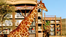 Disney's Animal Kingdom Lodge - familjehotell med bra barnrabatter.